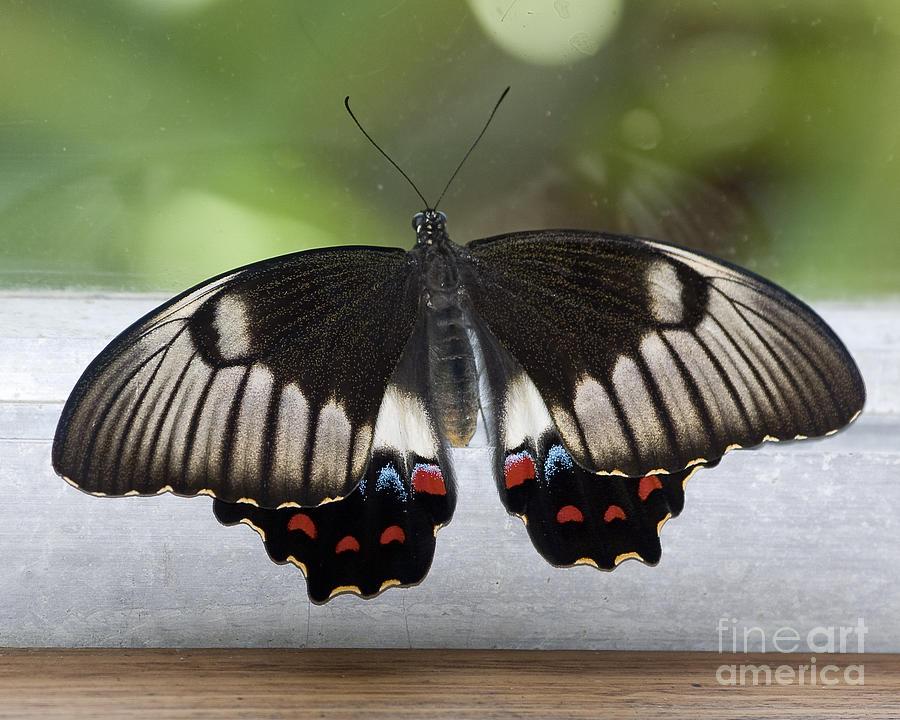 Butterfly Photograph - Butterfly by Steven Ralser