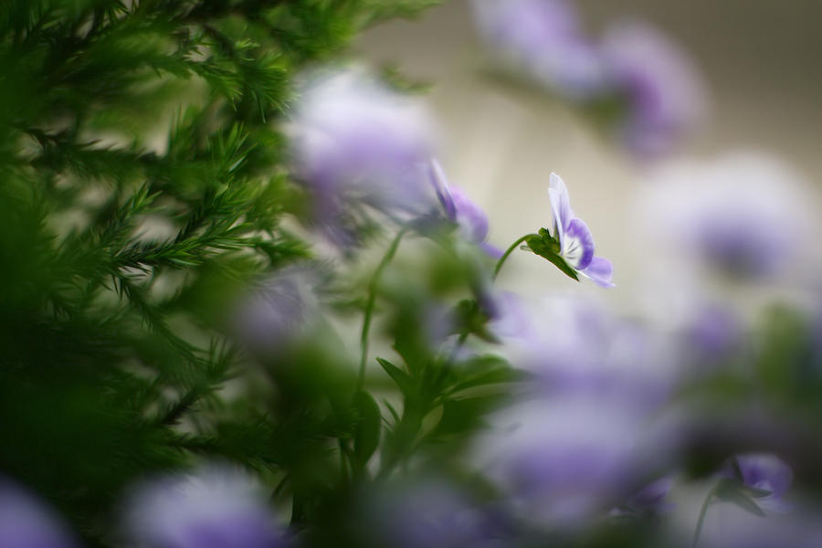 Nature Photograph - Butterflys Dream 4 by Afrison Ma