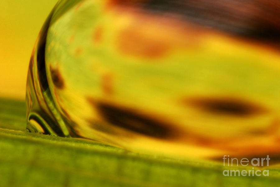 C Ribet Orbscape 0835 Photograph