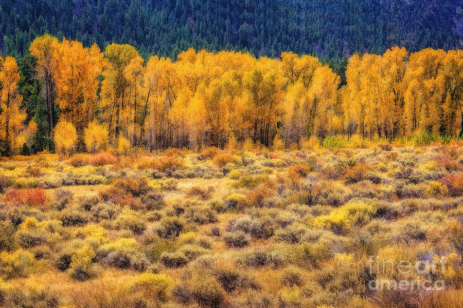 Cache La Poudre River Colors Photograph  - Cache La Poudre River Colors Fine Art Print