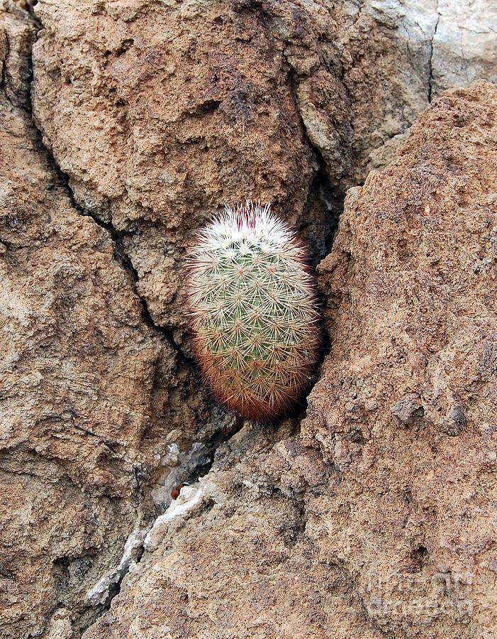 how to grow cactus video