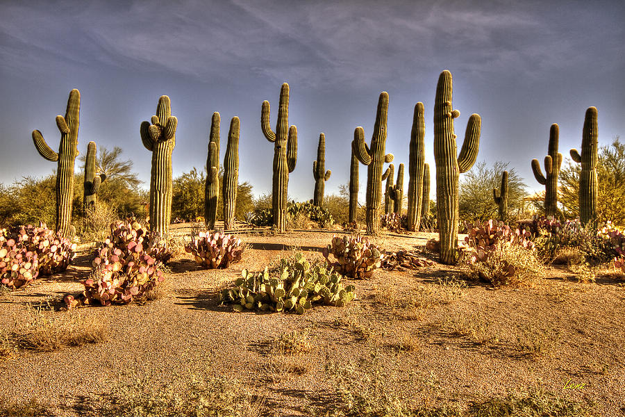 Cactus Patch Photograph