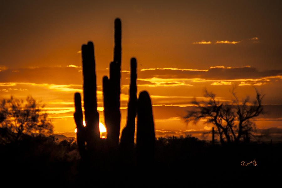 Cactus Sunset is a photograph by Penny Lisowski which was uploaded on ...