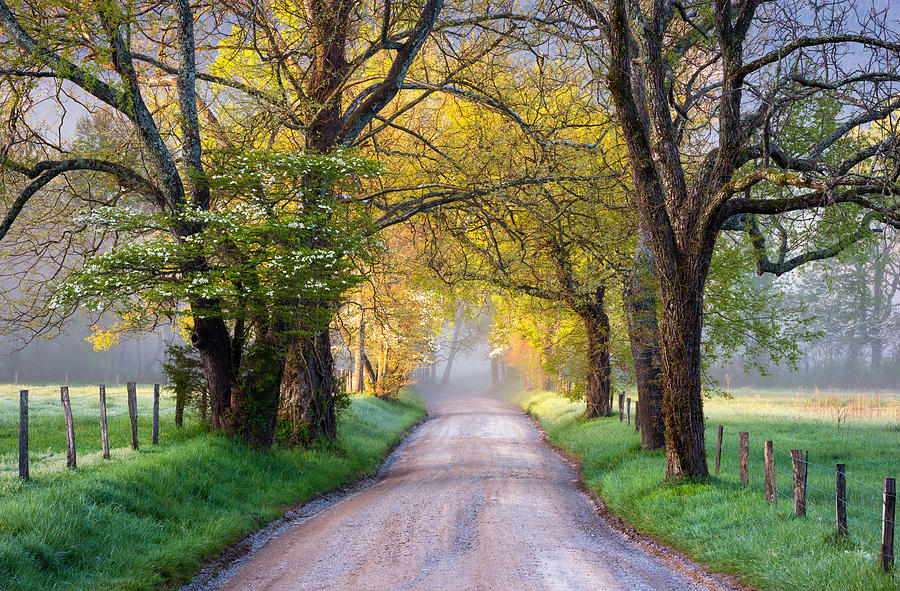 Cades Cove Photograph - Cades Cove Great Smoky Mountains National Park - Sparks Lane by Dave Allen