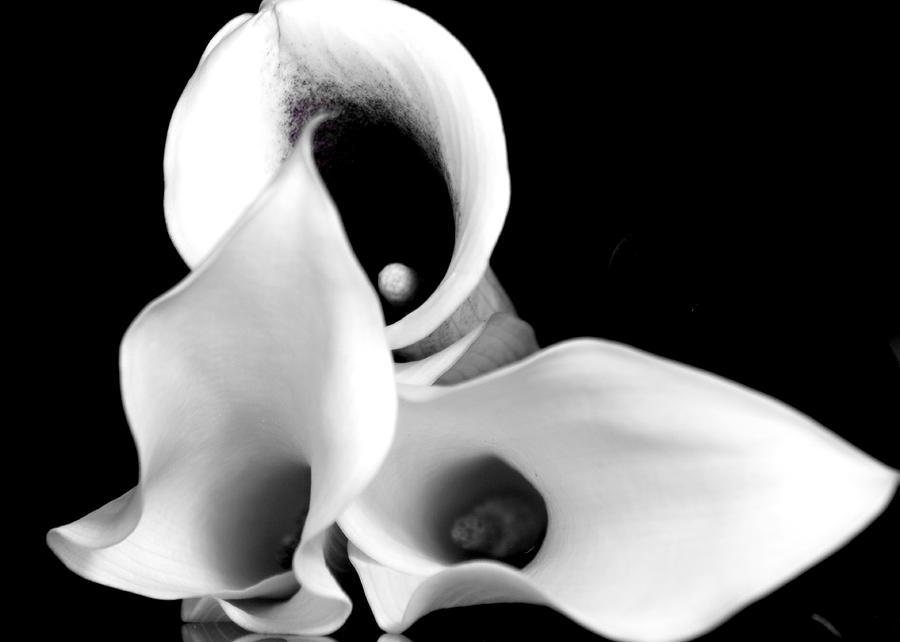 Cala Lilies In Black And White Photograph