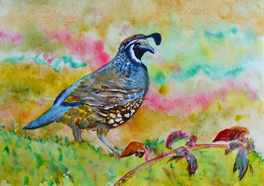 California Quail Painting  - California Quail Fine Art Print