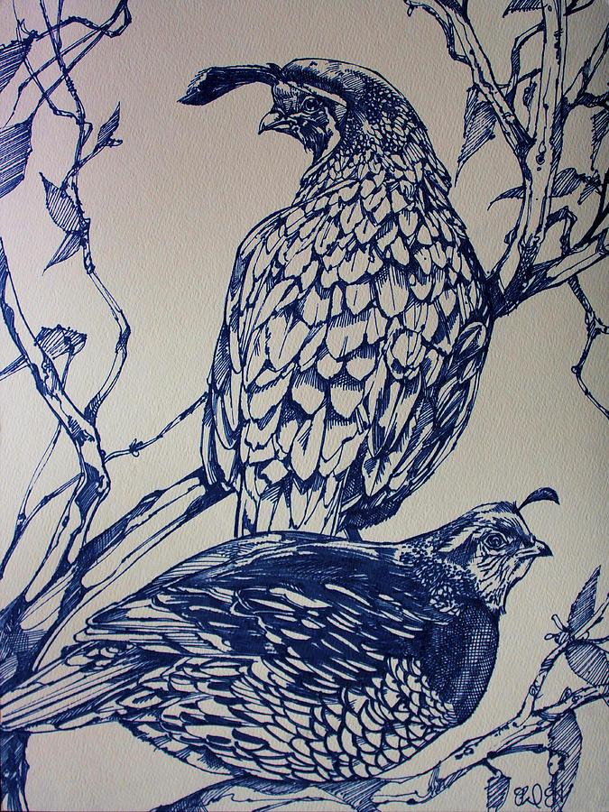 Birds Drawing - California Quail by Derrick Higgins