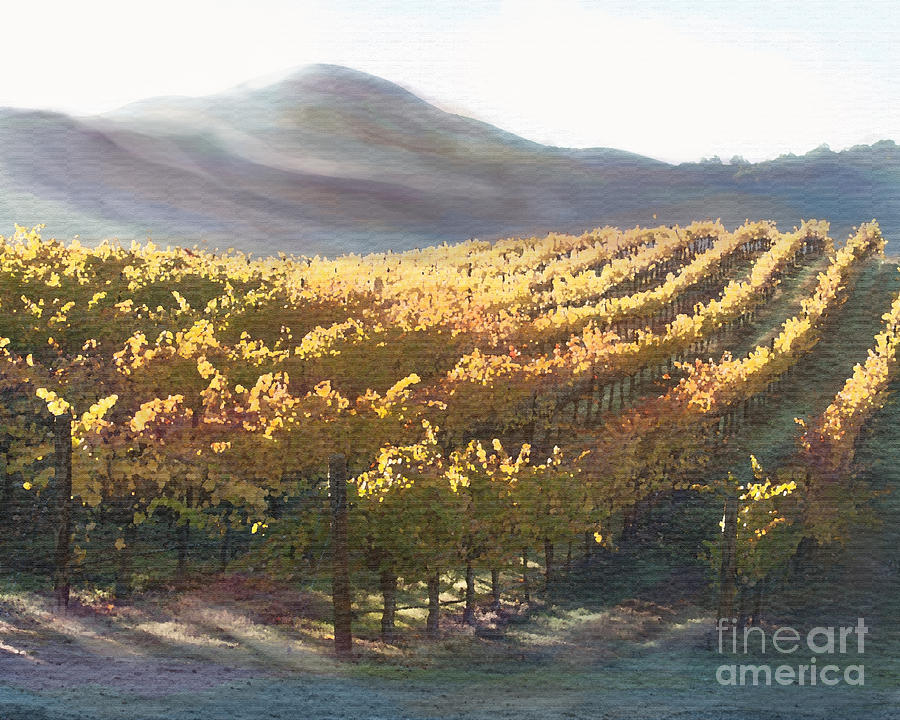 California Vineyard Series Vineyard In The Mist Painting  - California Vineyard Series Vineyard In The Mist Fine Art Print