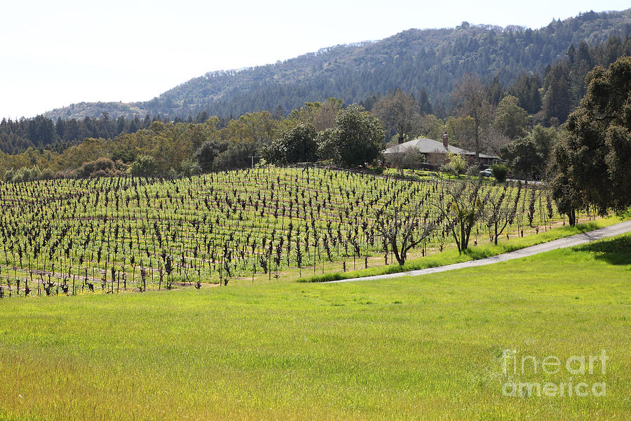 California Vineyards In Late Winter Just Before The Bloom 5d22073 Photograph
