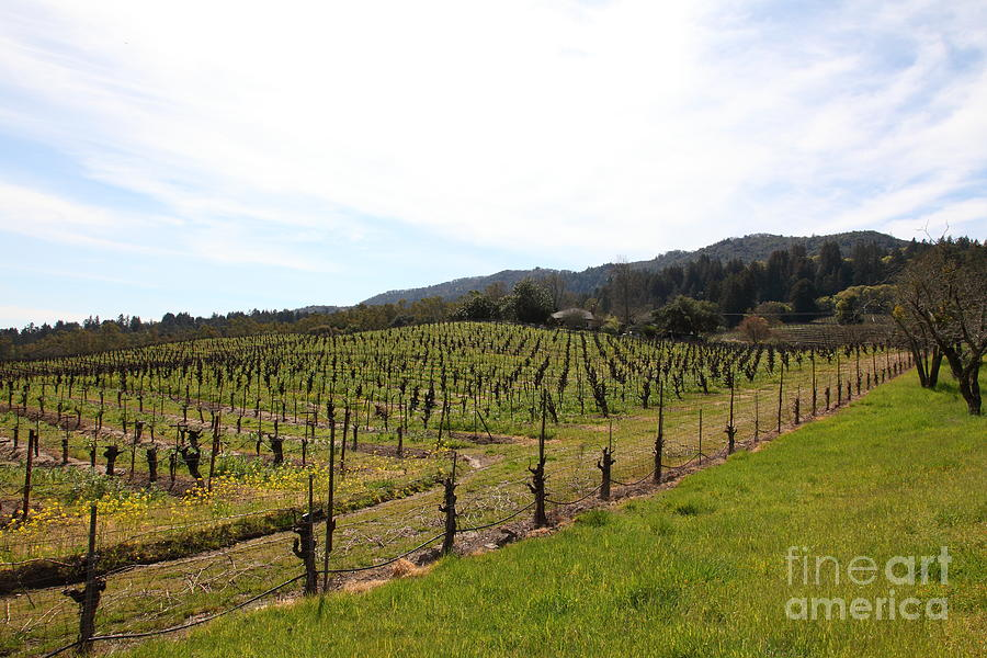 California Vineyards In Late Winter Just Before The Bloom 5d22114 Photograph