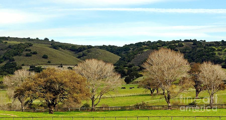 California Winter Landscape Photograph