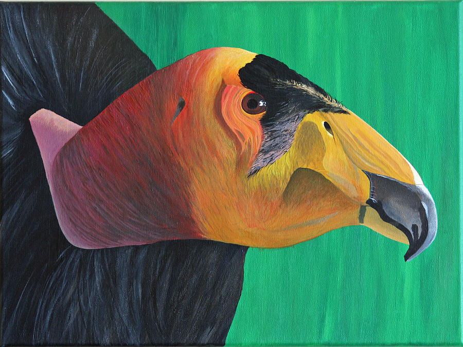Scottish Artist Painting - Californian Condor by Aileen Carruthers