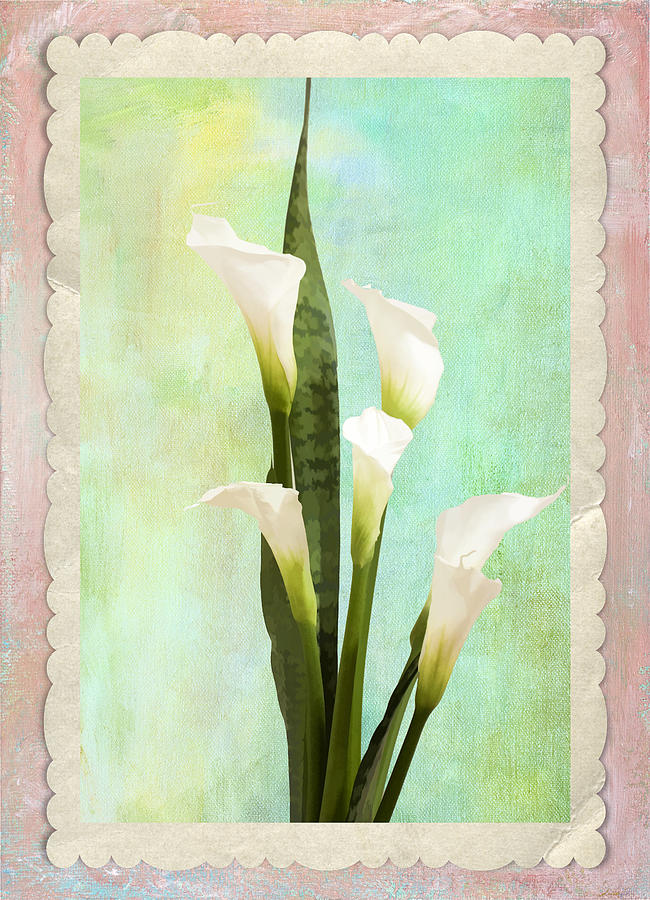 Calla Lillies Photograph