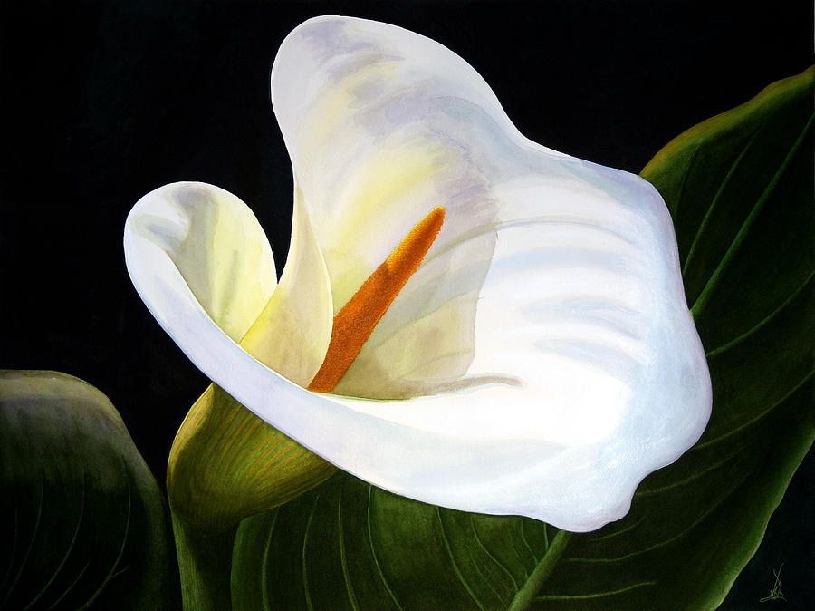 Calla Lily II Painting by Wm Kelly Bailey