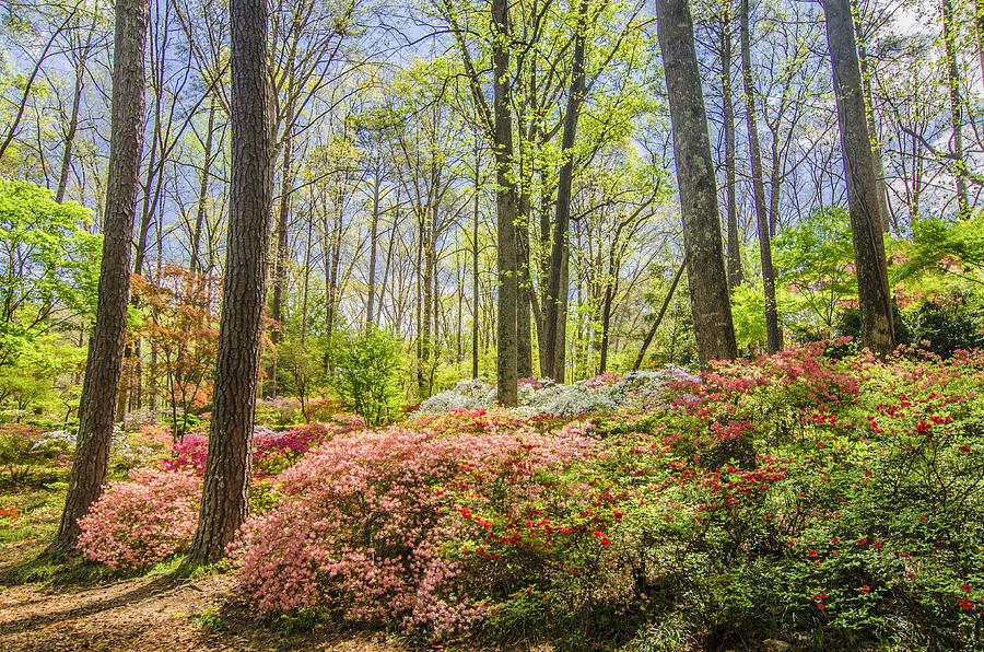 Callaway Gardens Ga Springtime Serenade By Robert Stephens