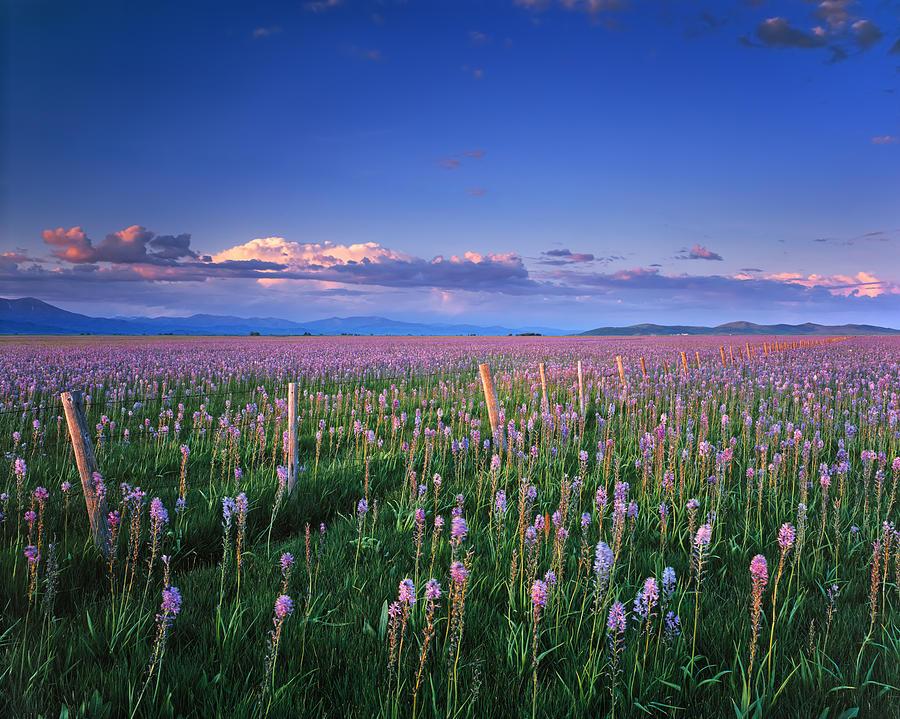 Camas Prairie Photograph