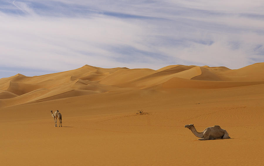 Sand Photograph - Camels by Ivan Slosar
