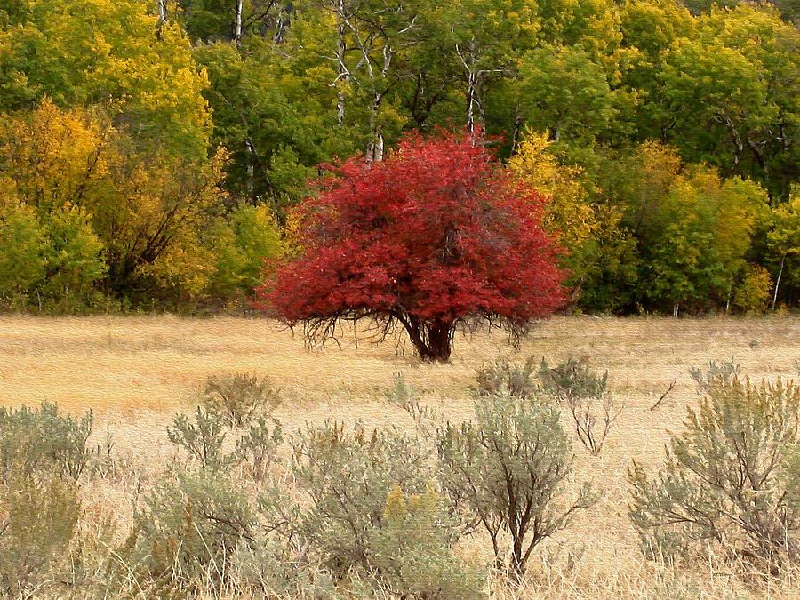 Canadian Autumn Photograph
