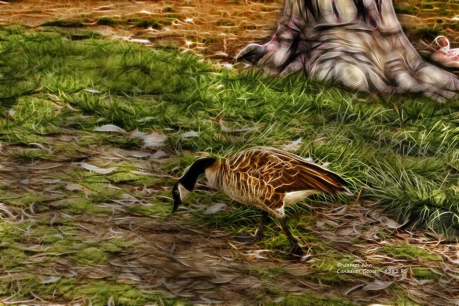 Canadian Goose 9382 F S Digital Art