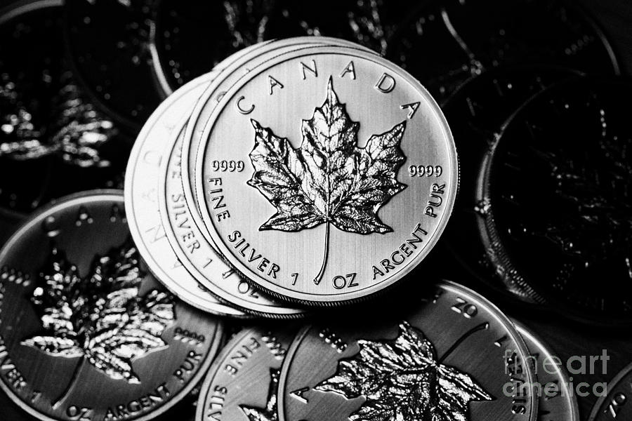 Canadian One Ounce Maple Leaf Silver Coins Photograph