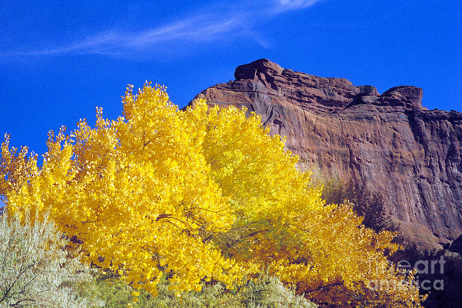 Canyon De Chelly Autumn    Photograph