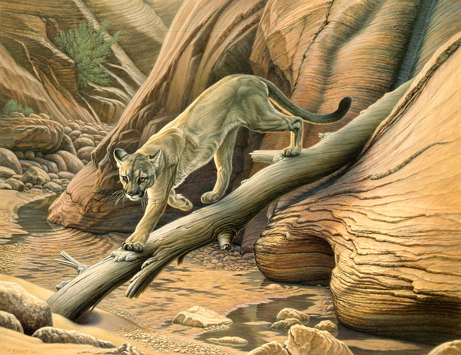 Wildlife Painting - Canyon Hunter -  Cougar by Paul Krapf