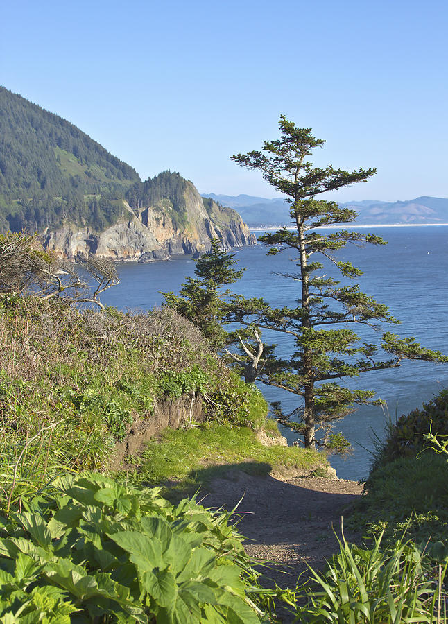 Cape Falcon Viewpoint Oregon Coast. Photograph  - Cape Falcon Viewpoint Oregon Coast. Fine Art Print