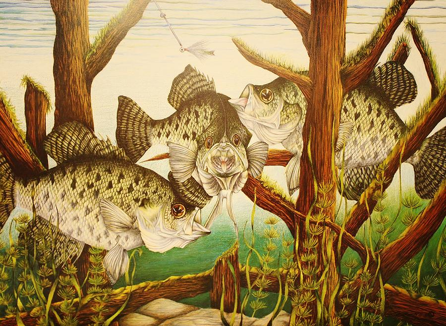 Fishing Drawing - Captivating Crappies by Bruce Bley