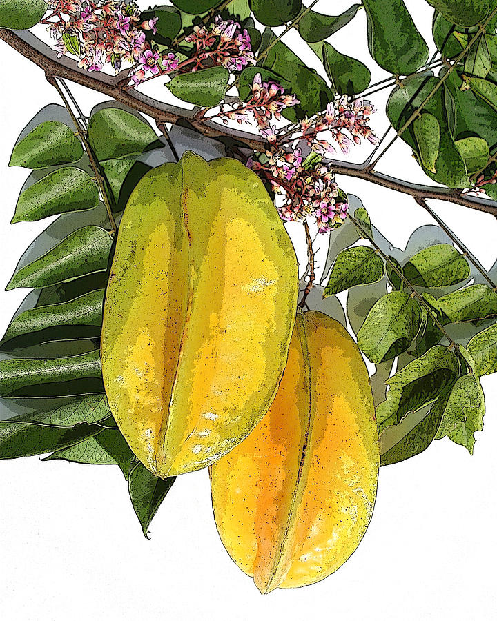 Carambolas Starfruit Two Up Photograph