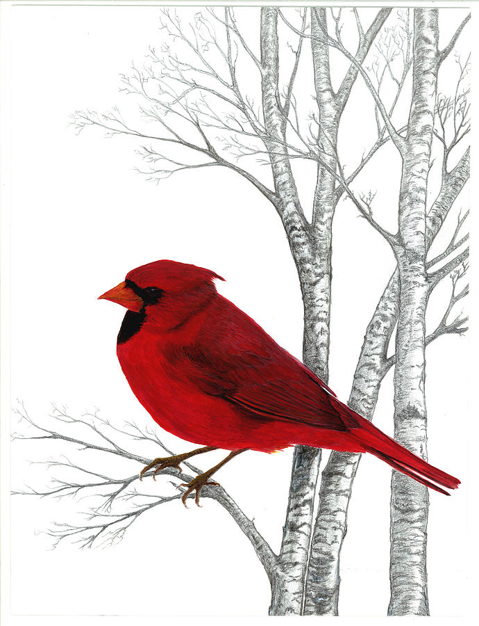 Cardinal Natures Beauty Painting  - Cardinal Natures Beauty Fine Art Print