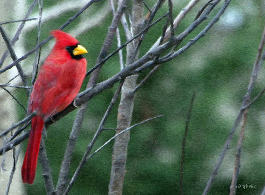 Animal Painting - Cardinal West by Jeff Kolker