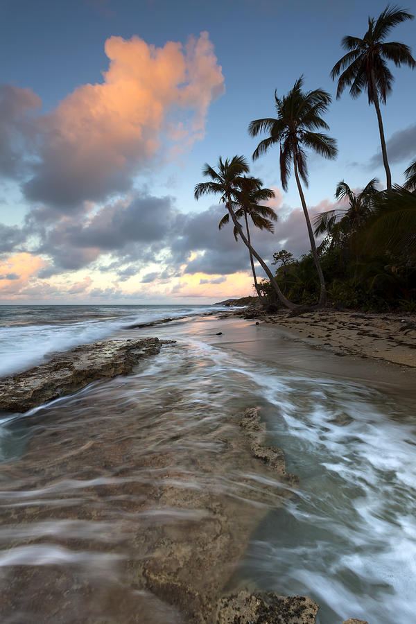 Caribbean Photograph - Caribbean Flow  by Patrick Downey