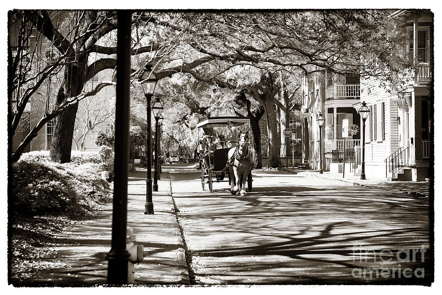 Carriage Ride In Charleston Photograph  - Carriage Ride In Charleston Fine Art Print