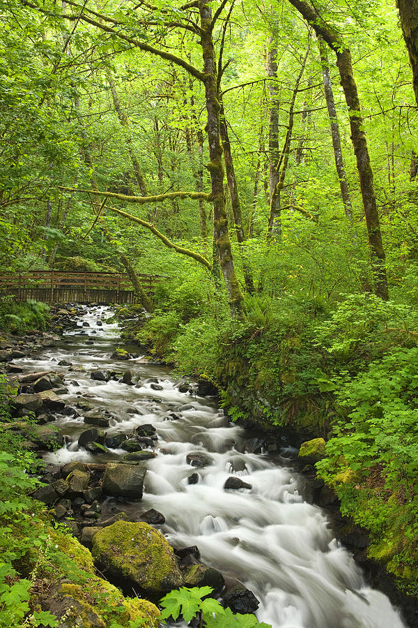 Cascading Stream In The Woods Photograph