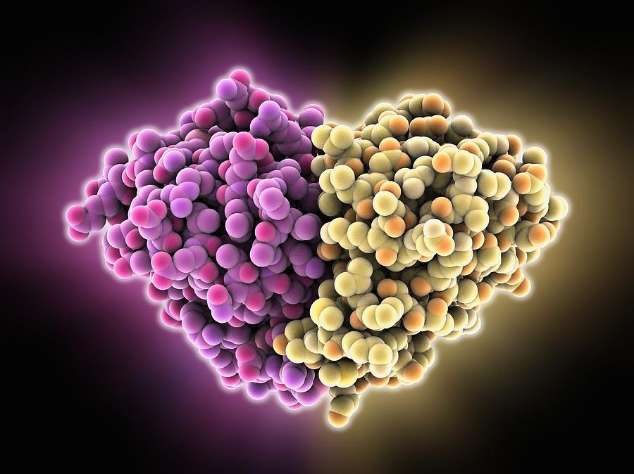 Cat Allergen Protein, Molecular Model Photograph