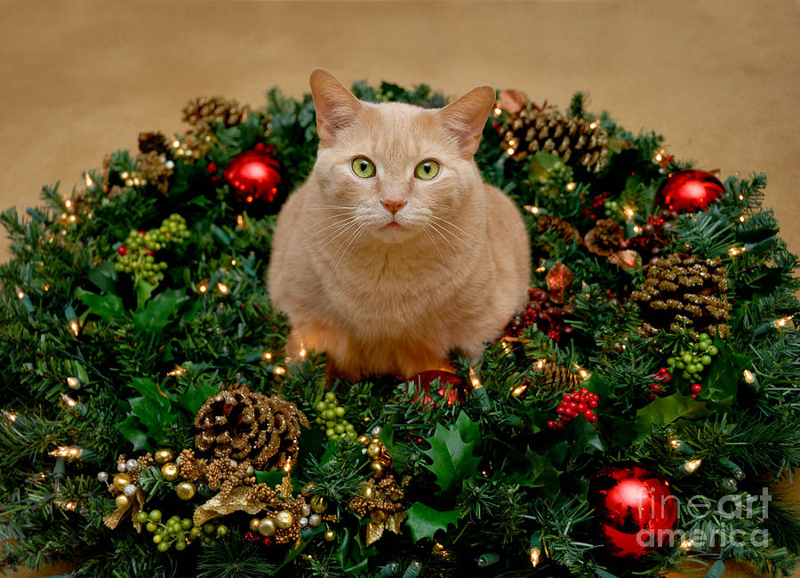 Cat And Christmas Wreath Photograph