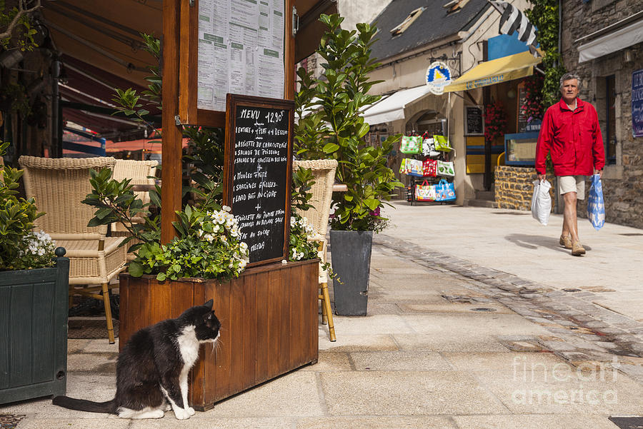 Cat And Restaurant Concarneau Brittany France Photograph  - Cat And Restaurant Concarneau Brittany France Fine Art Print