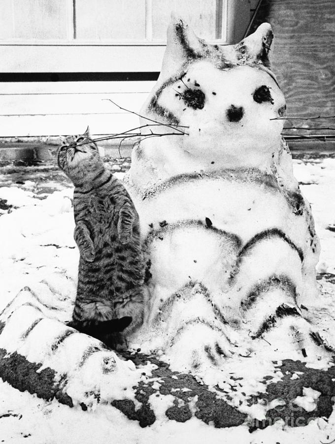 Cat And Snowcat Photograph