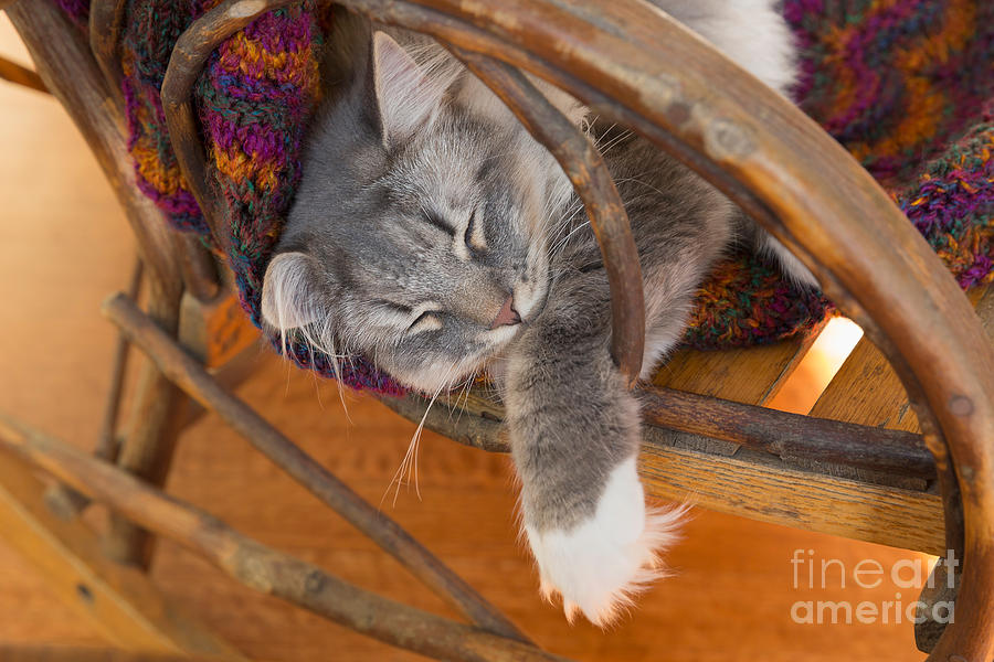 Cat Asleep In A Wooden Rocking Chair Photograph