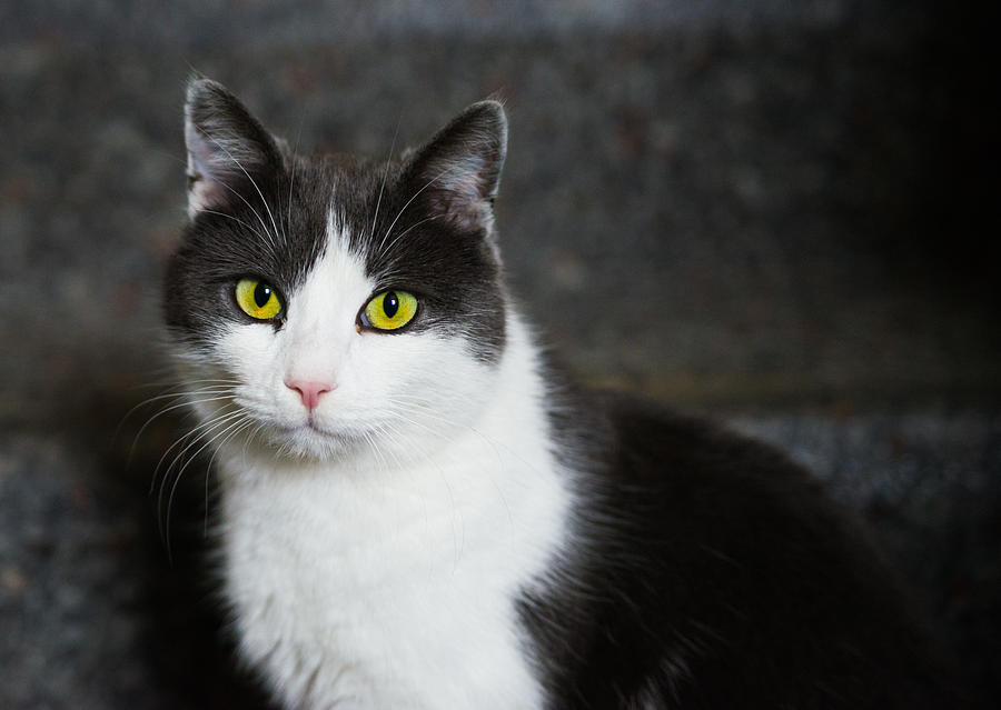 Cat Black And White With Green And Yellow Eyes Photograph