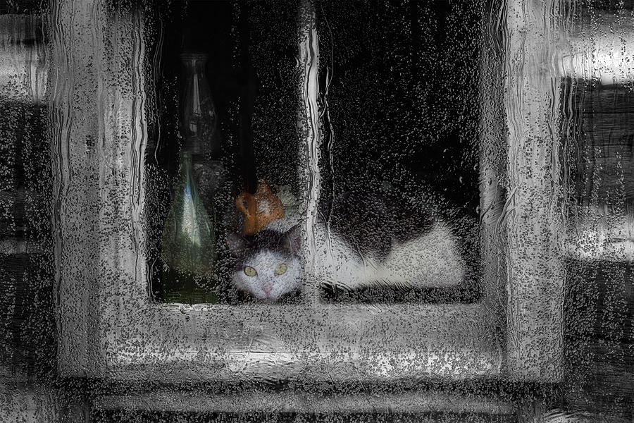 Goodbye Painting - Cat In The Window by Jack Zulli