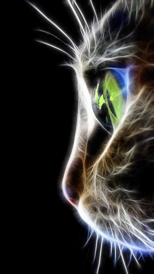 Cat Macro  Digital Art