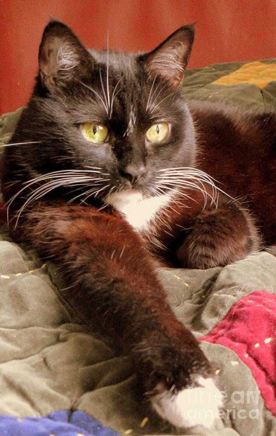 Cat On Velvet Photograph