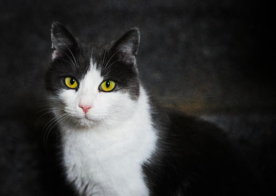 Cat Portrait With Texture Photograph