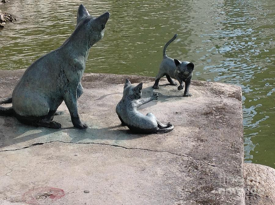 Cats By The River Photograph