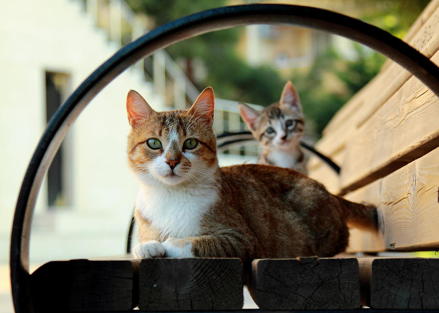 Cats Photograph - Cats Family by Zafer GUDER