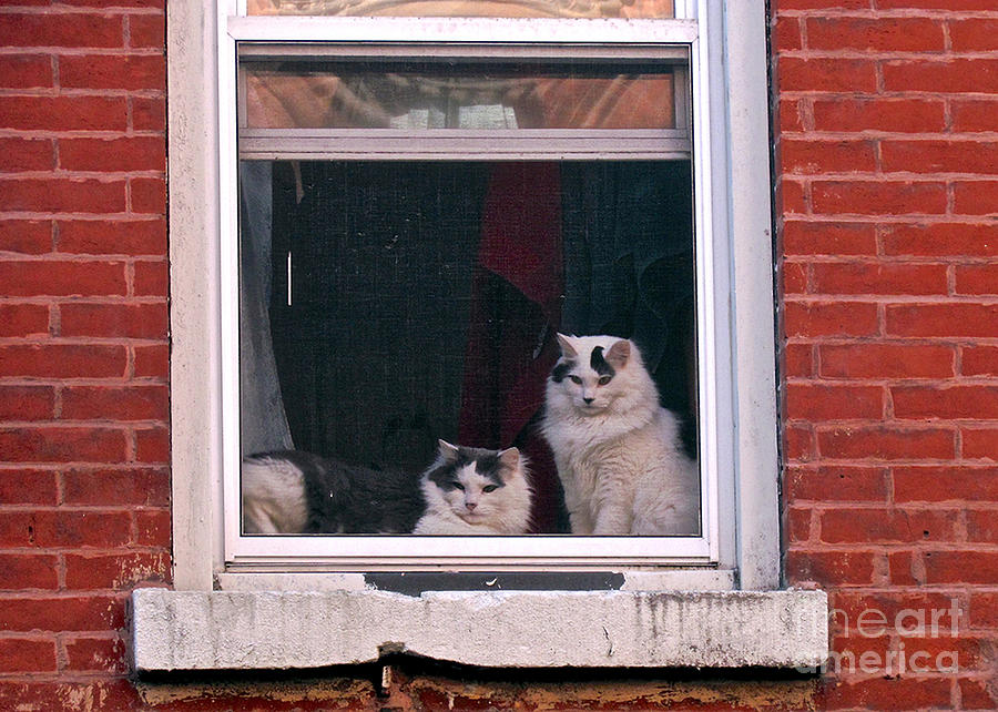 Cats On A Sill Photograph