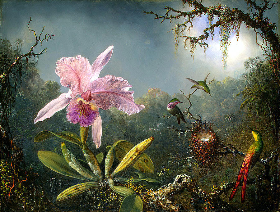 Cattleya Orchid And Three Brazilian Hummingbirds Digital Art