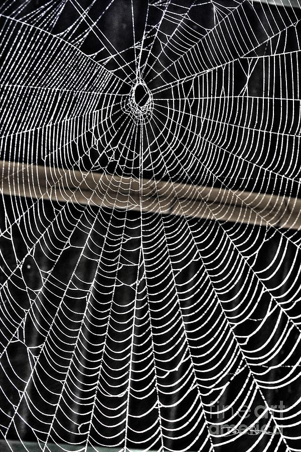 Caught Up In Various Webs Digital Art  - Caught Up In Various Webs Fine Art Print