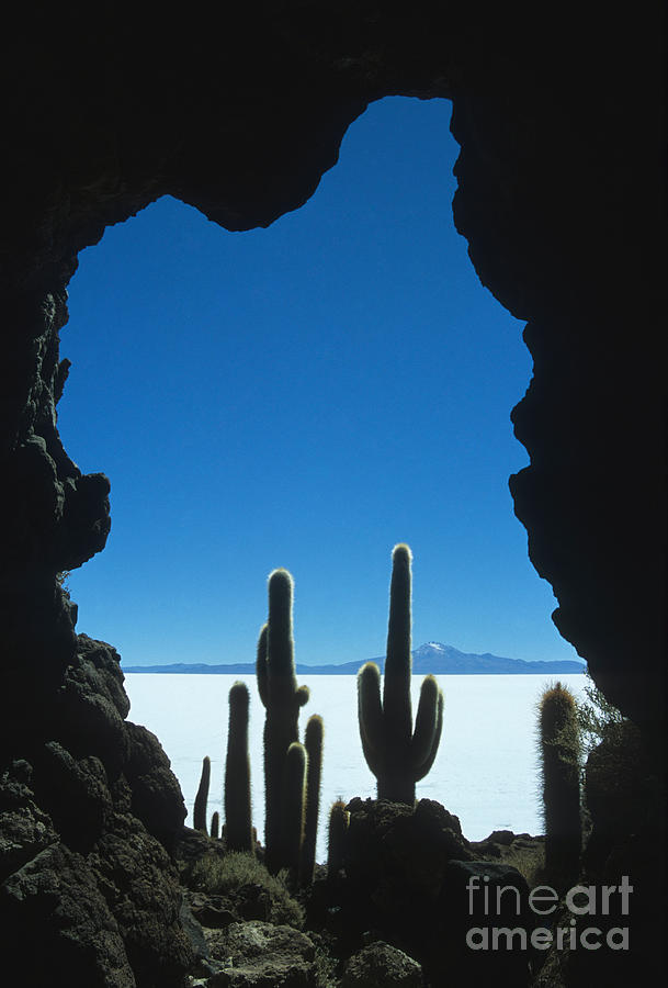 Cave And Cacti Photograph  - Cave And Cacti Fine Art Print